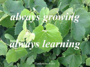 grapeleavesalwaysgrowinglearning