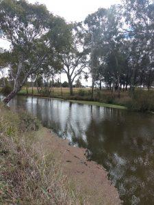 Condamine River winds through parkland