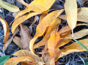 seasons in life - autumn leaves