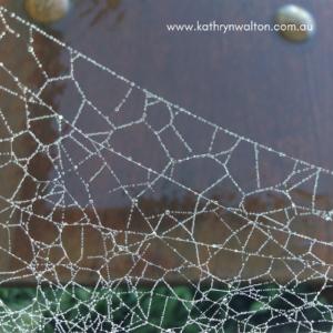 glistening spider web