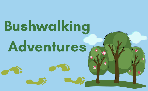 bush adventure
